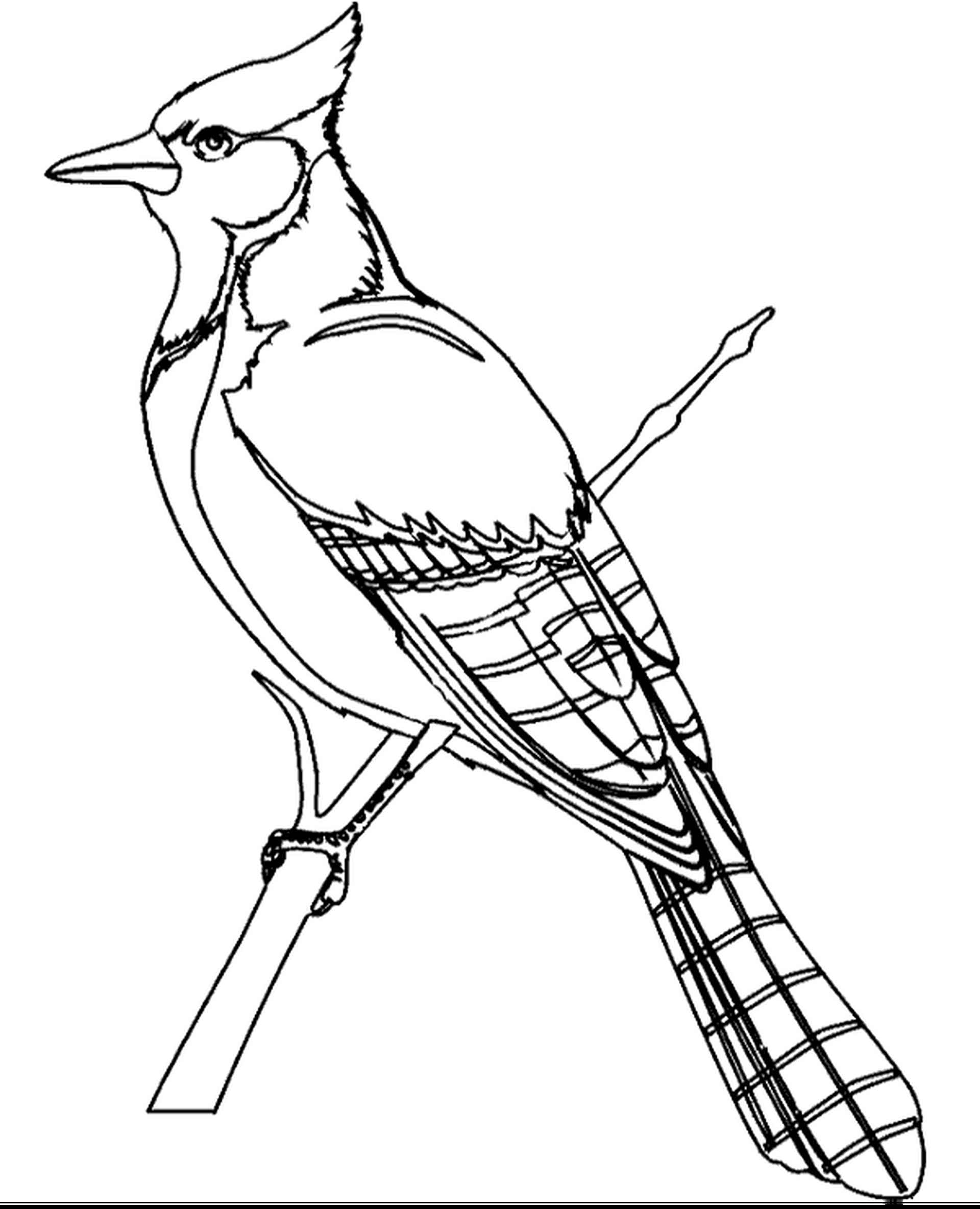 A Bird Sitting On The Branch Coloring Page