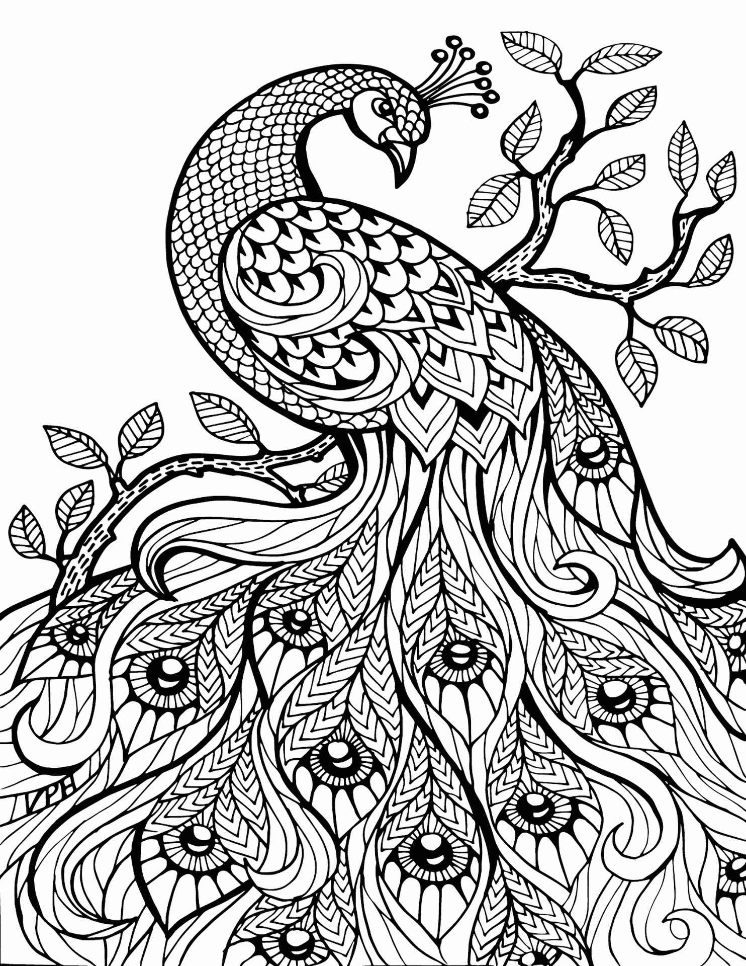Awesome Peacock Adult Coloring Page