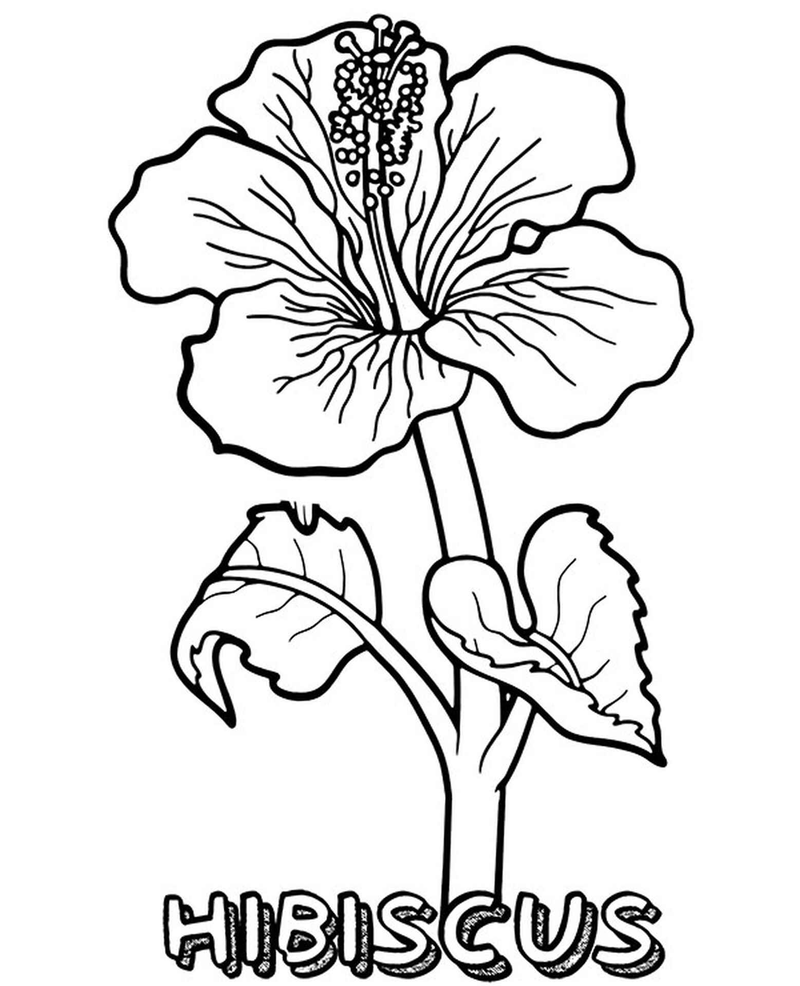 Beautiful Hibiscus Coloring Pages