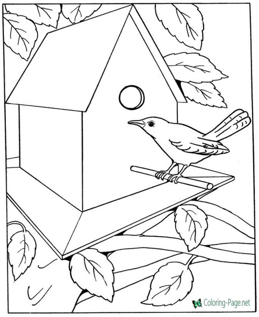 Bird Sitting Near Birdhouse