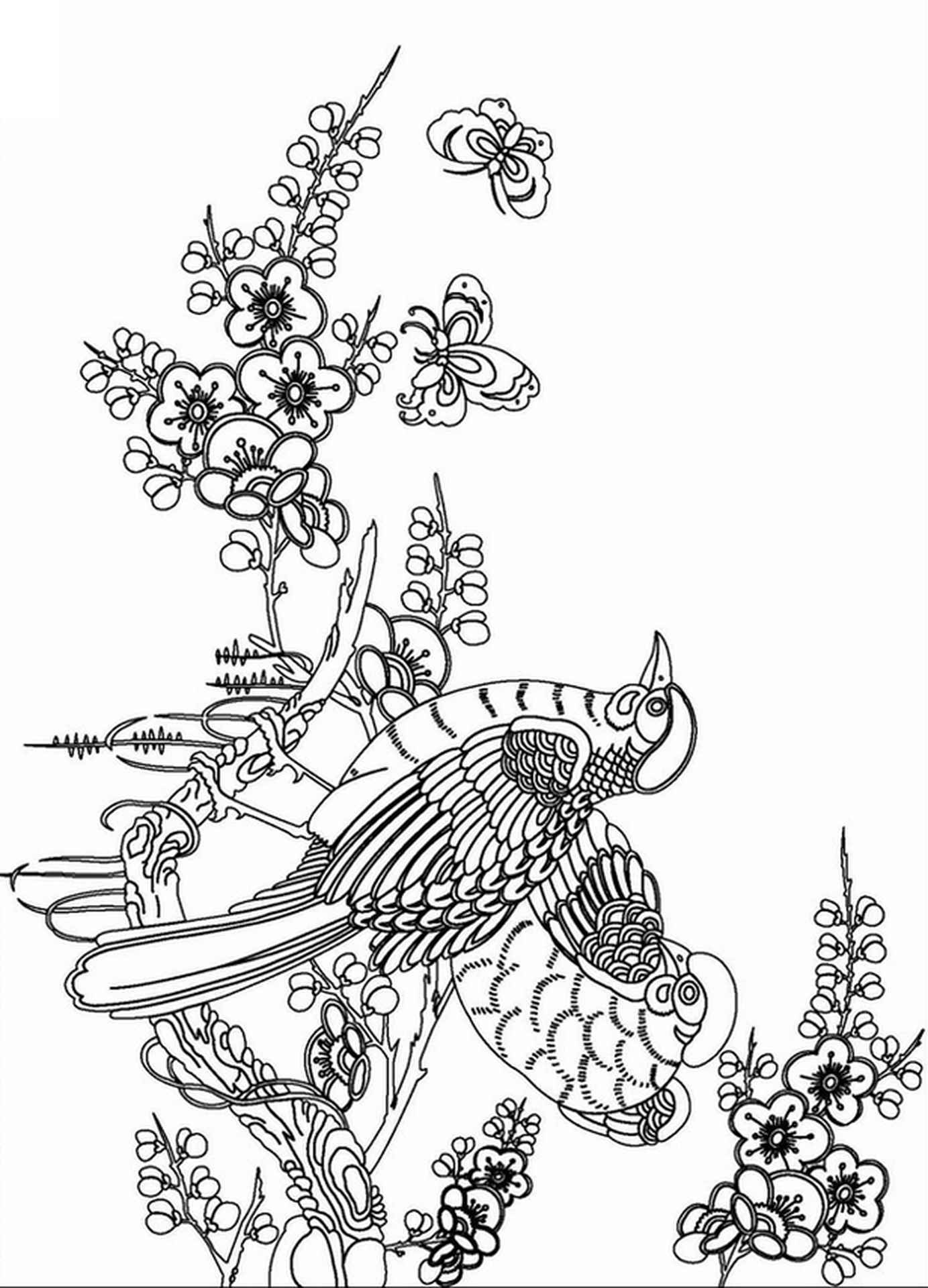 Birds Coloring Page For Adults