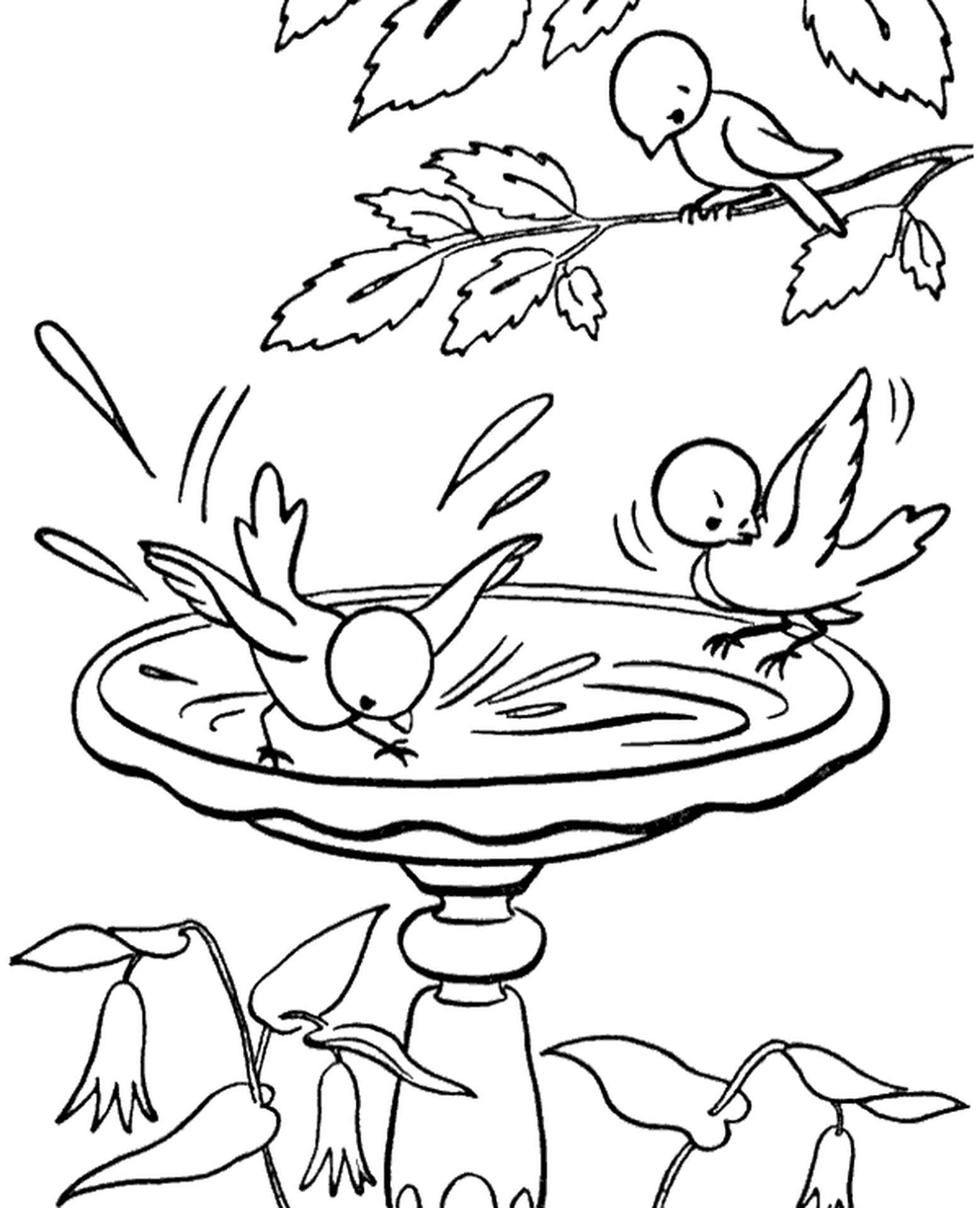 Birds Drinking Water Coloring Sheets