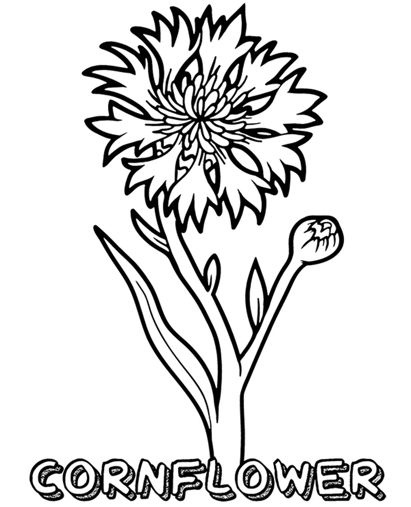 Blue Cornflower Coloring Page
