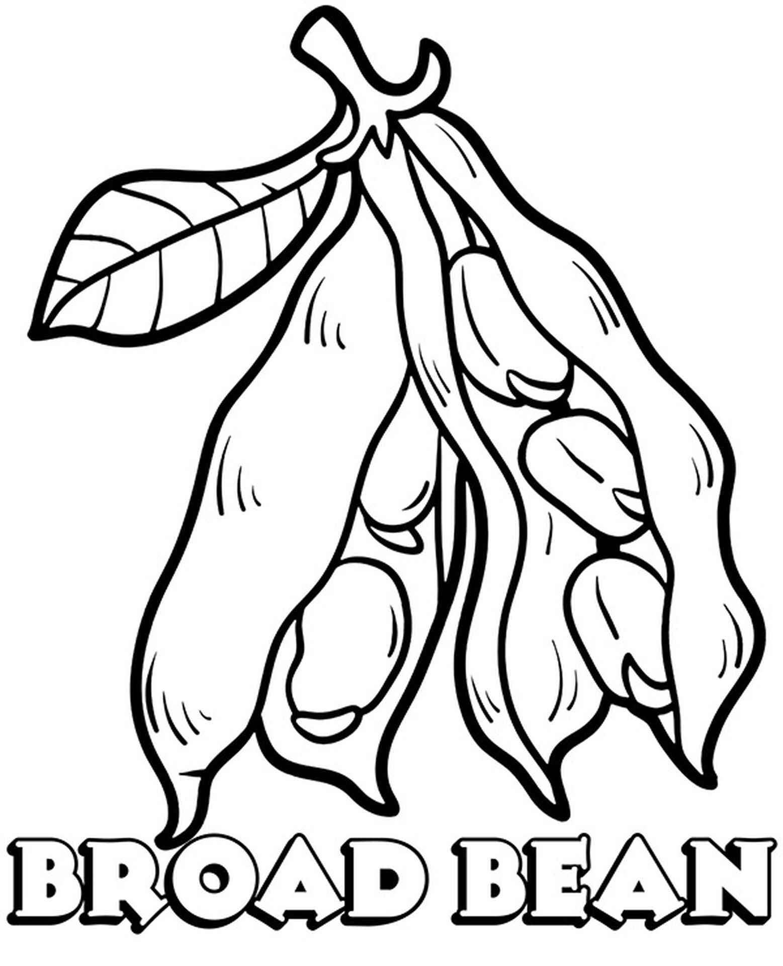 Broad Bean Coloring Page