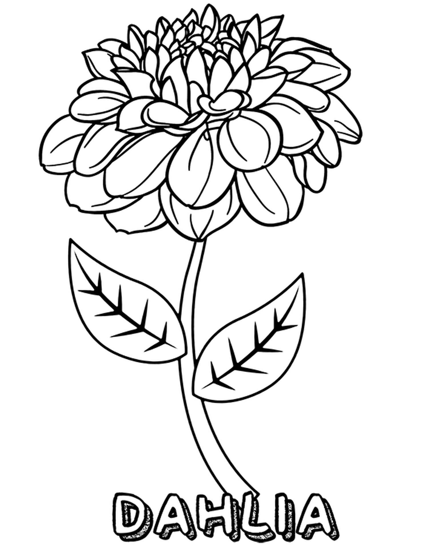 Burgundy Dahlia Coloring Page