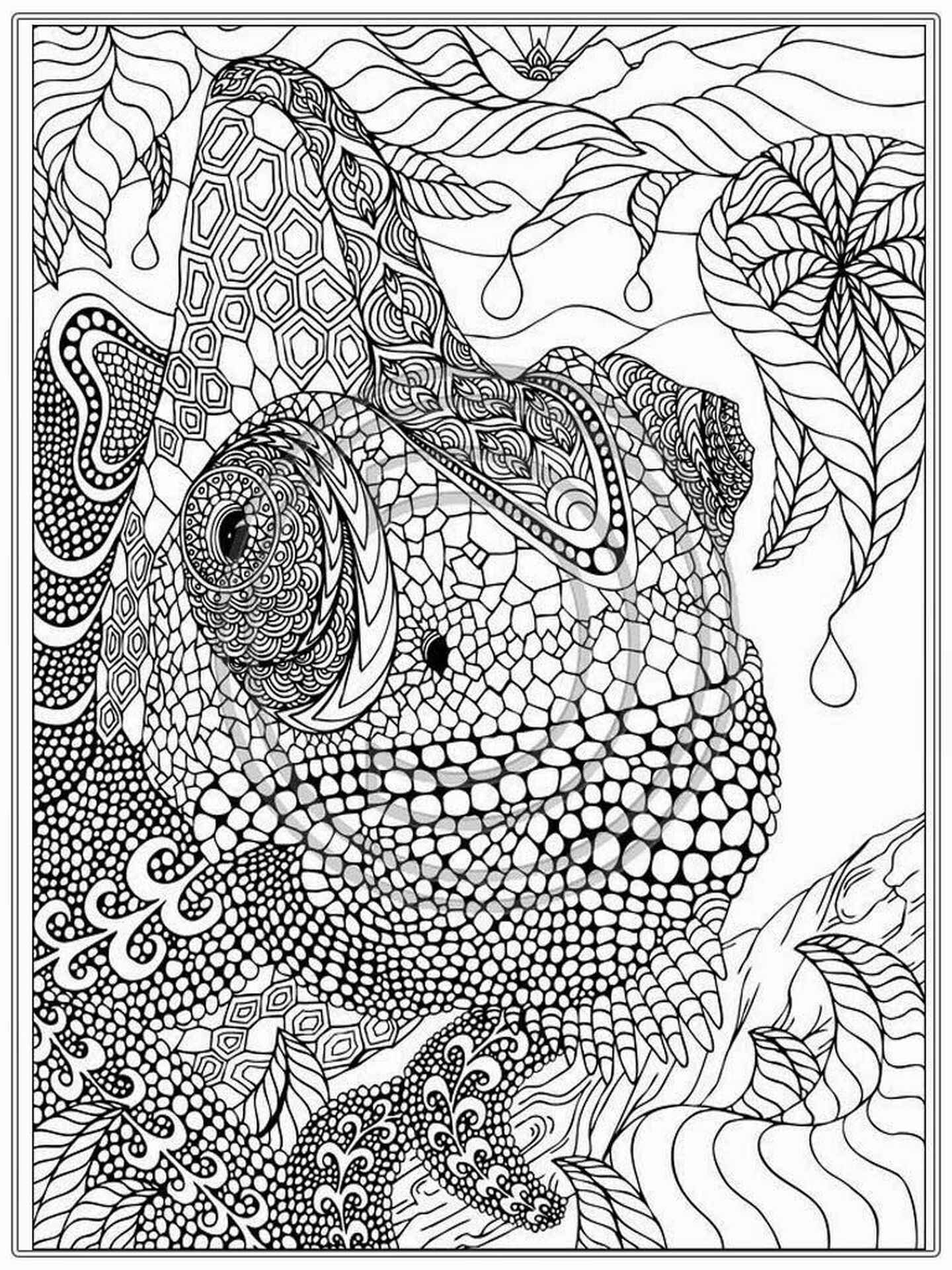 Chameleon Coloring Sheet For Adults