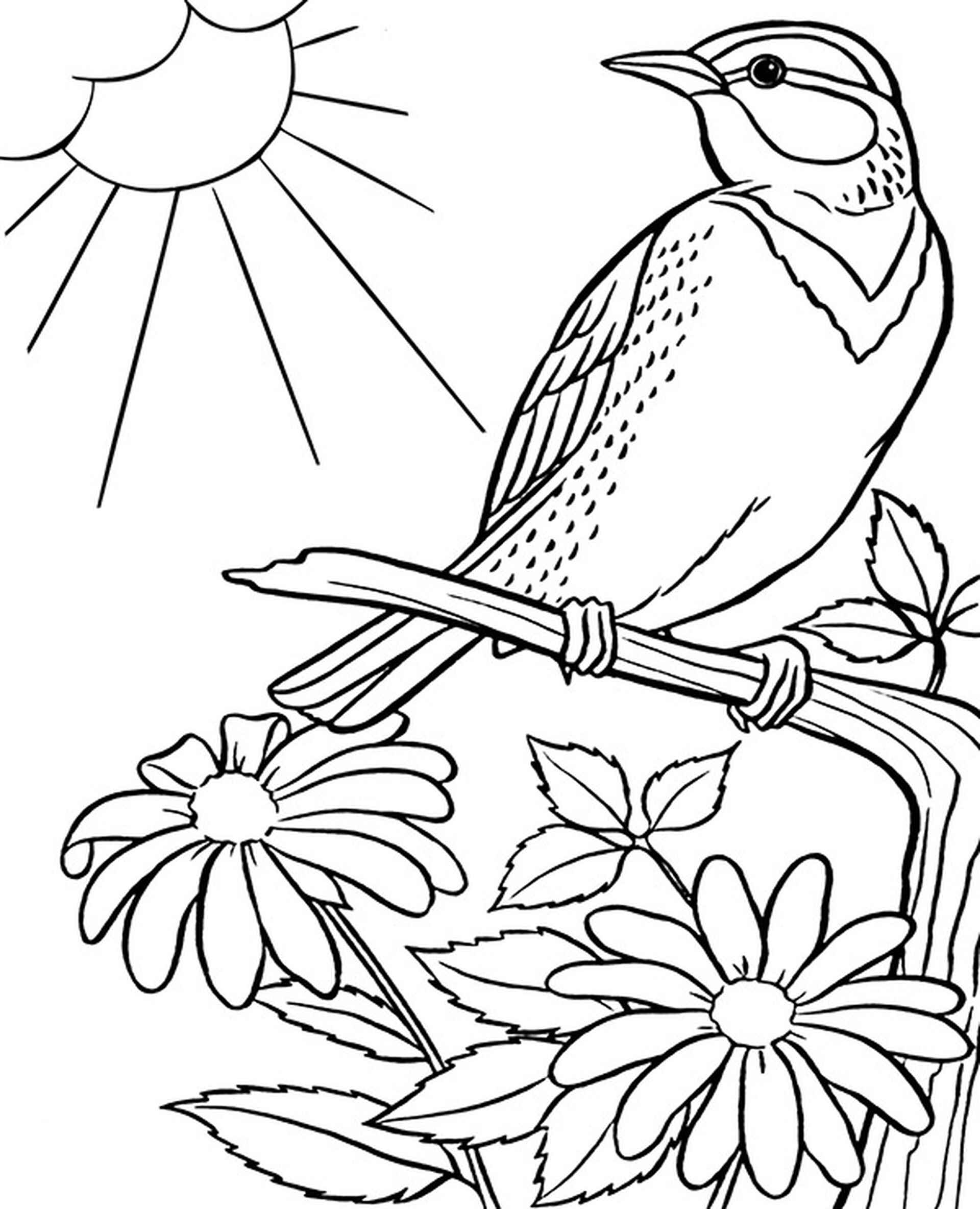 Chipping Sparrow In The Sun Coloring Page