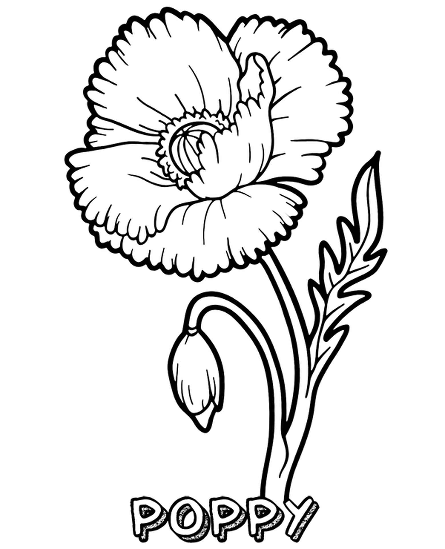 Coloring Page Of Blooming Poppy