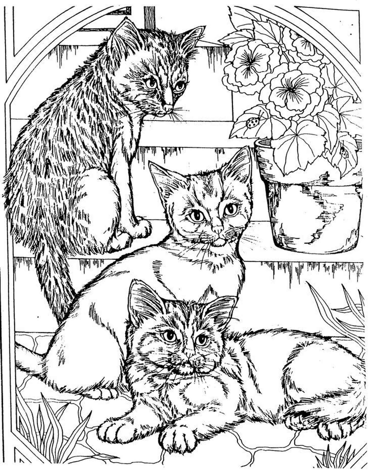 Complex Coloring Page Of Cats