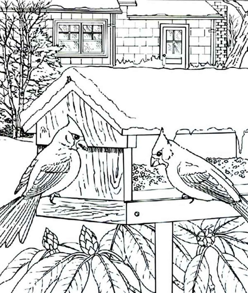 Detailed Cardinal Birdhouse Coloring Page