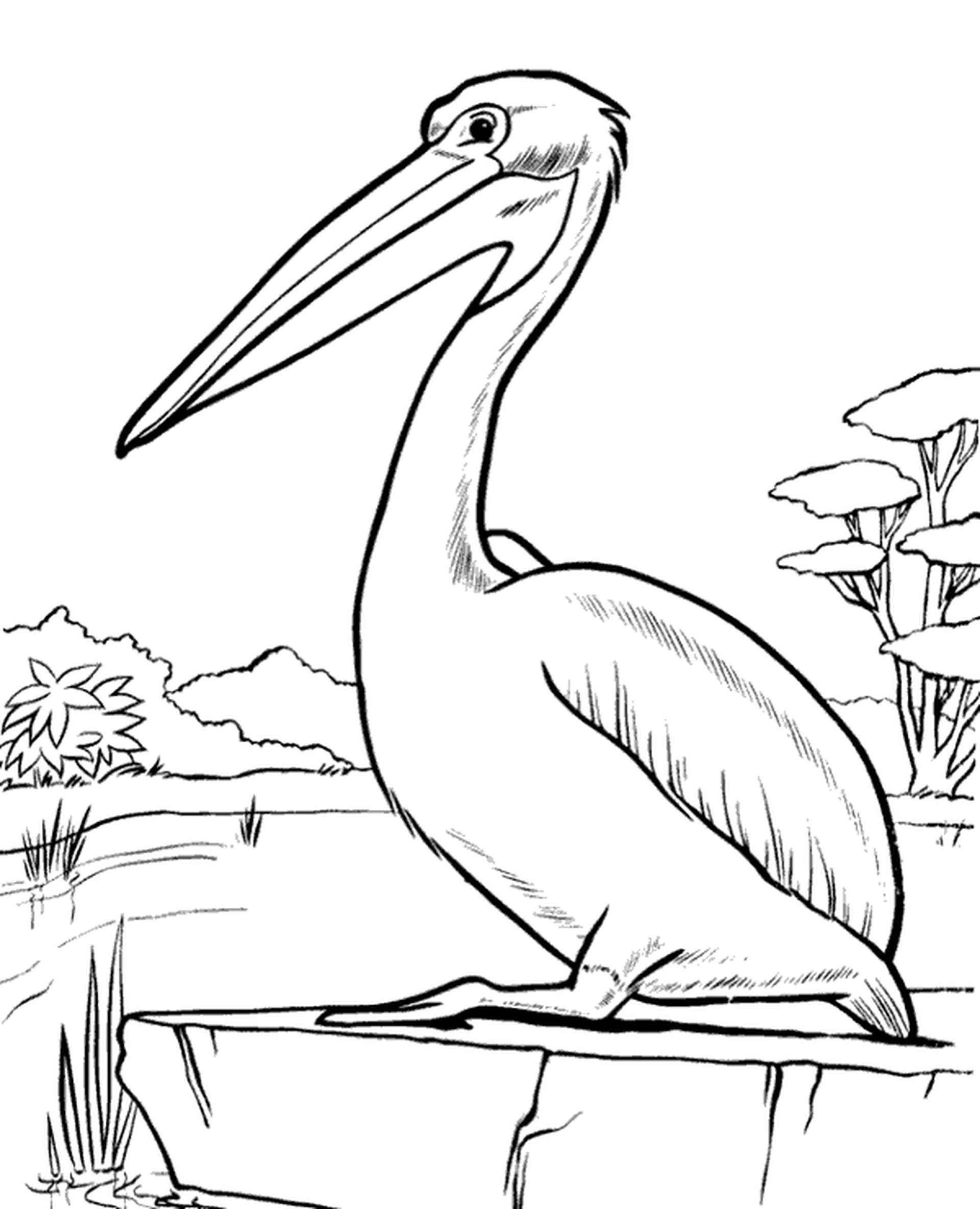 Detailed Pelican Coloring Page