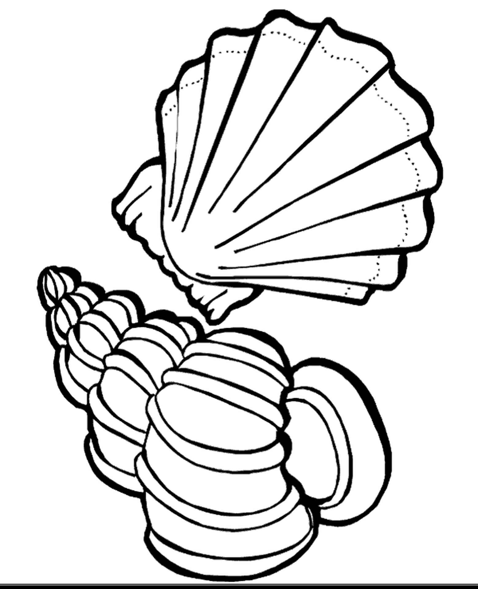 Exotic Sea Shells Coloring Page