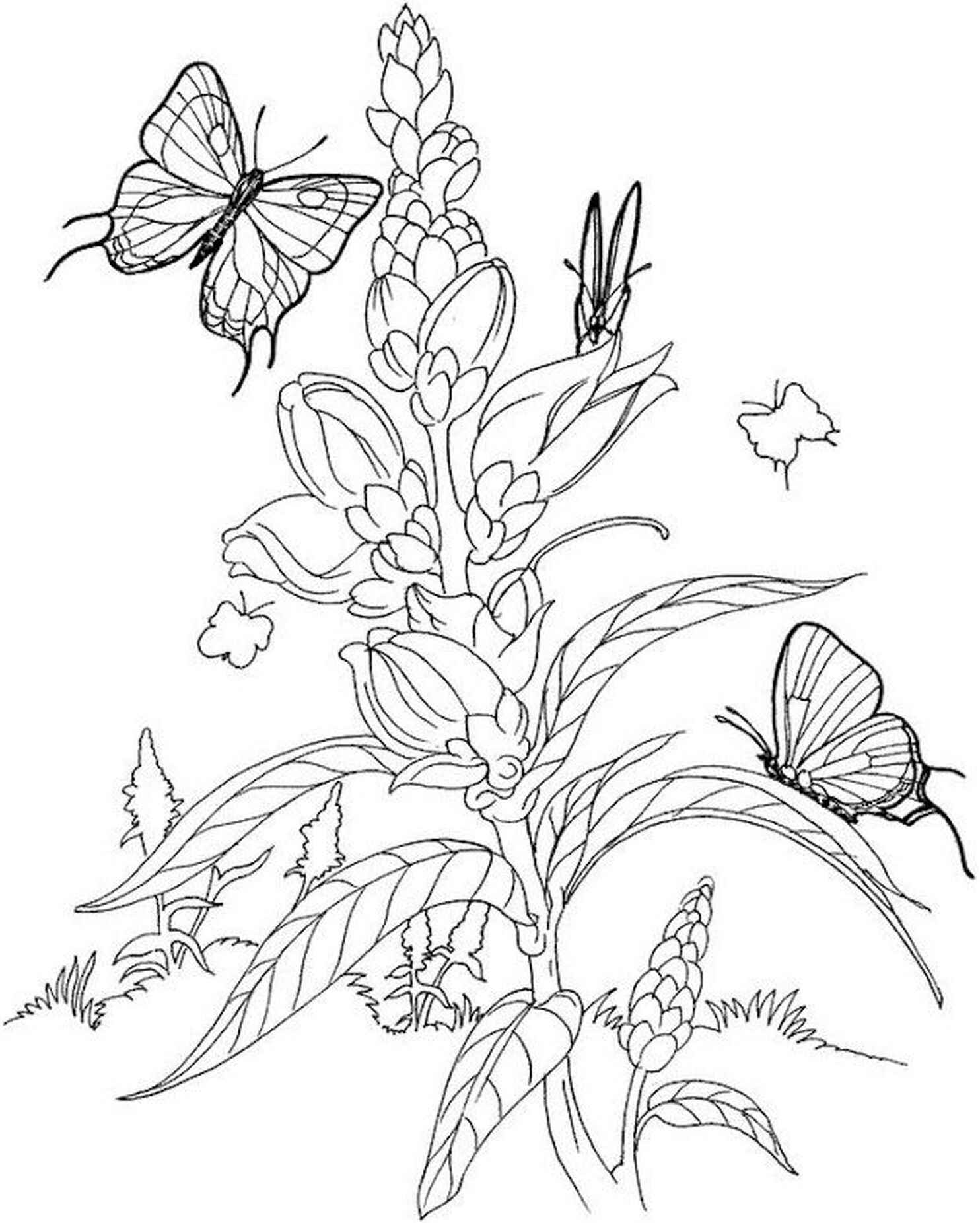 Flower And Butterflies Adult Coloring Page