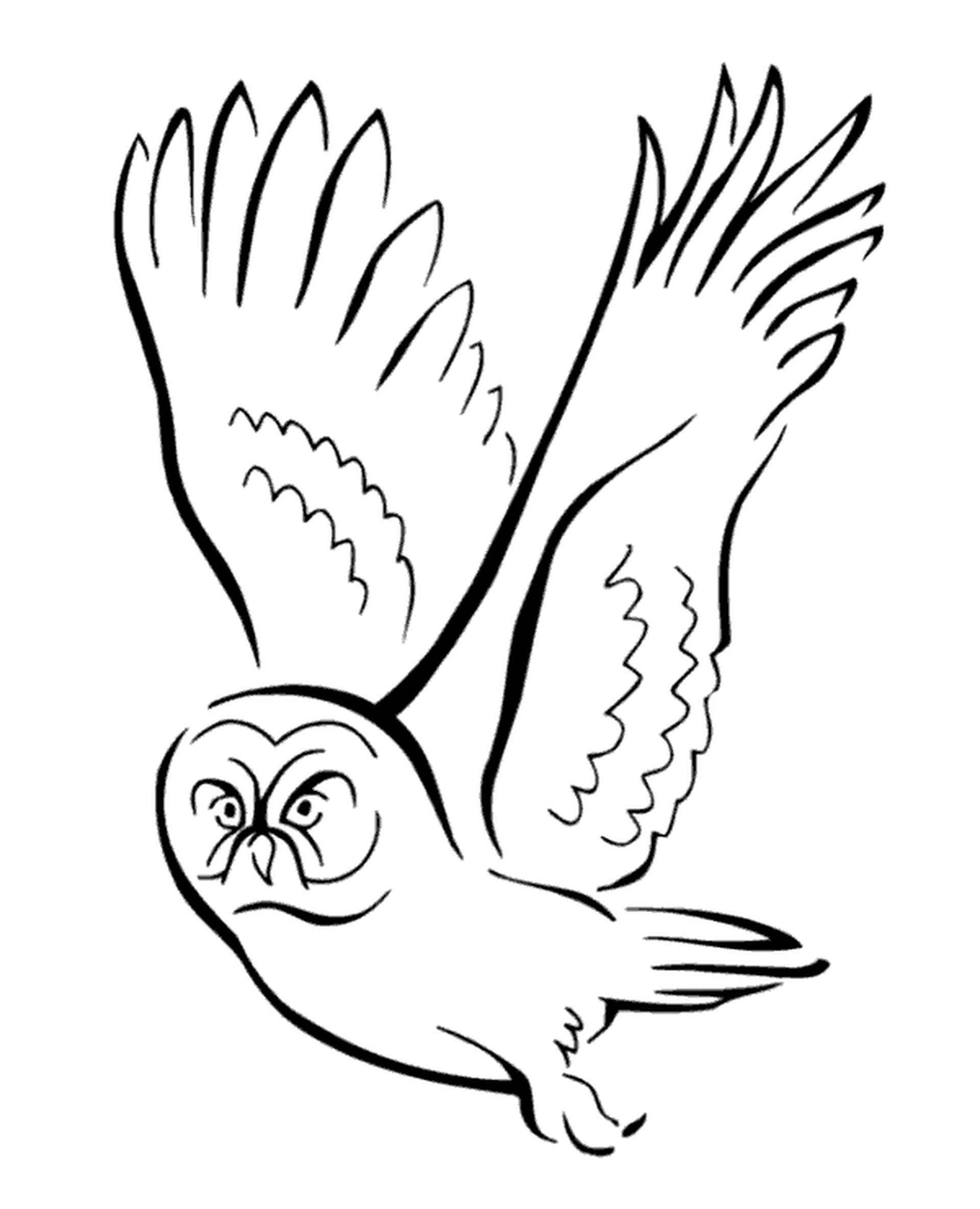 Flying Owl Hunting A Mouse Coloring Page