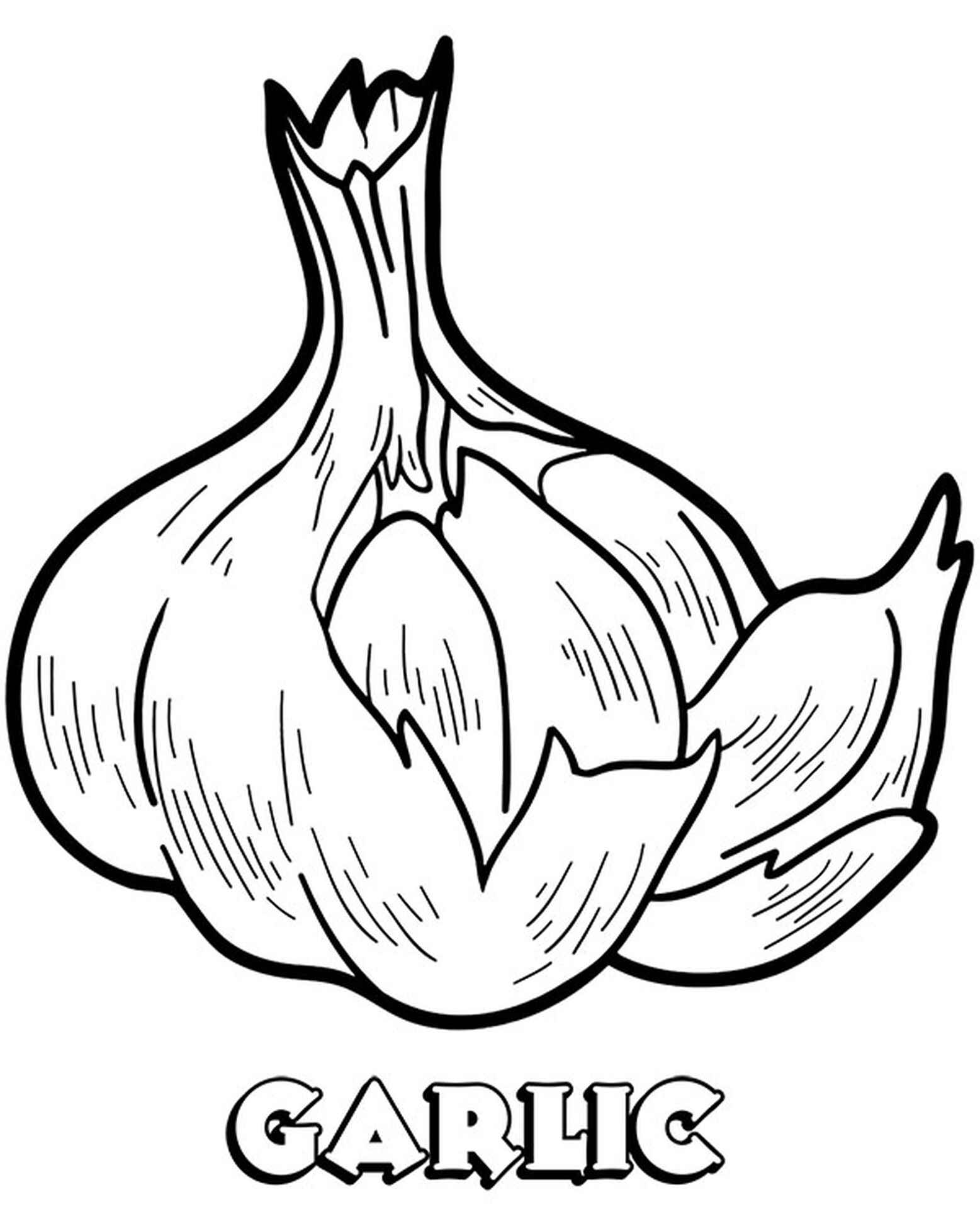 Garlic Coloring Picture