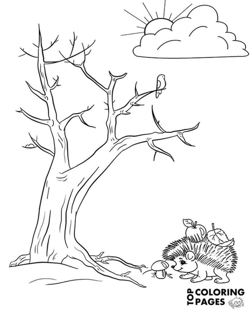 Hedgehog And A Tree Coloring Book