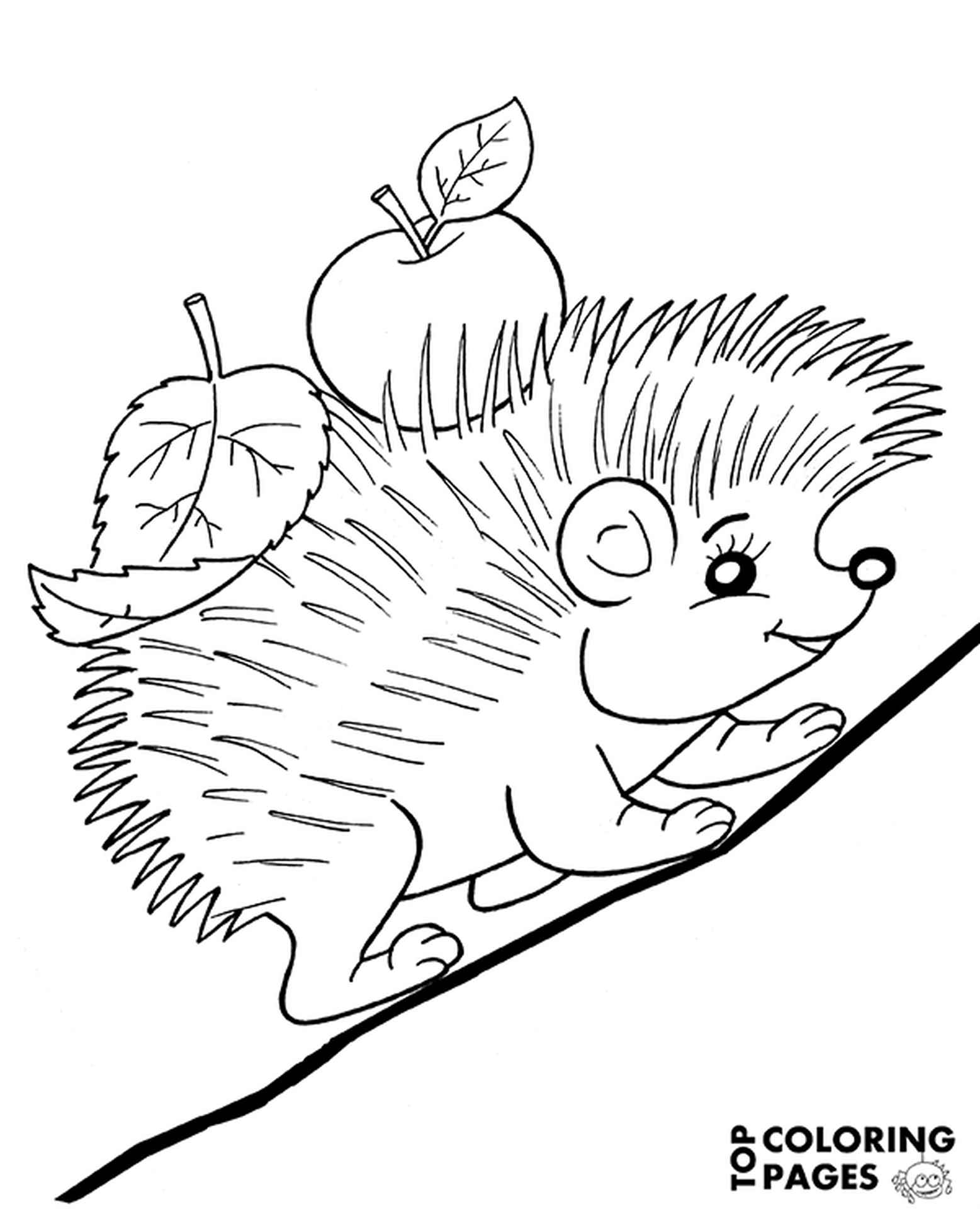 Hedgehog With A Leaf And An Apple