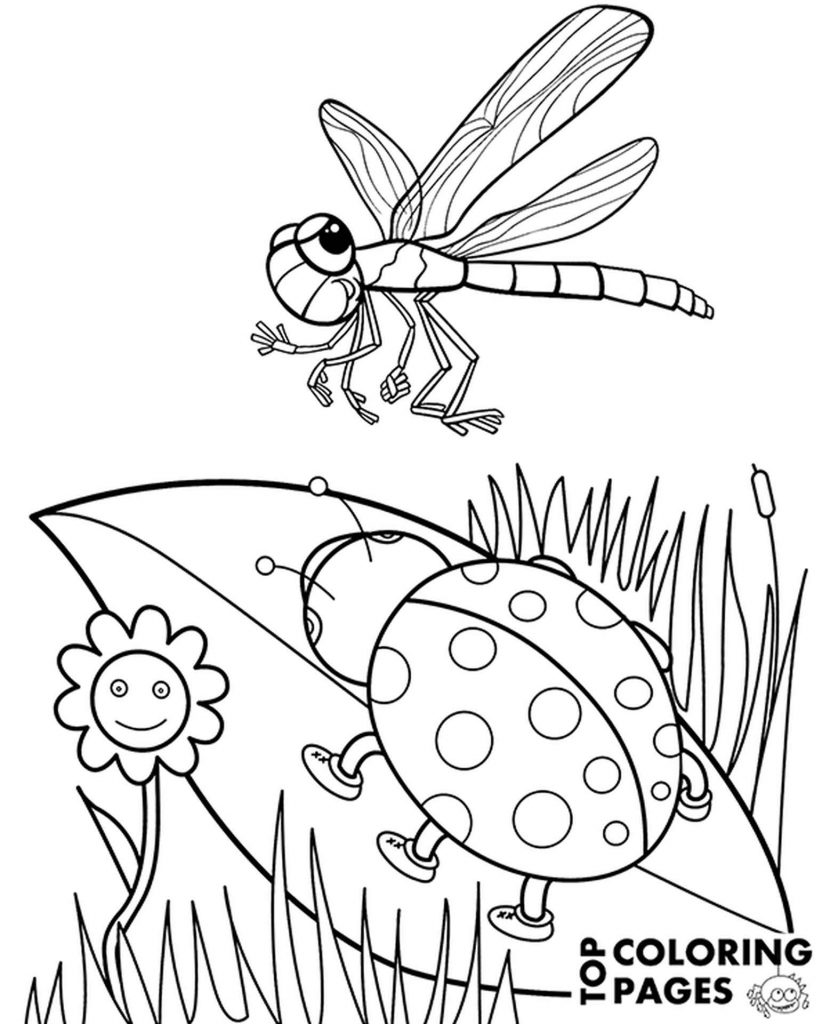 Ladybird And Dragonfly Coloring Sheet