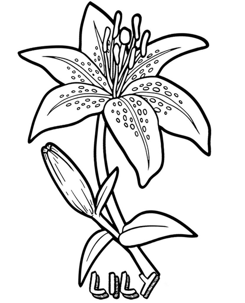 Lovely Lily Coloring Sheet