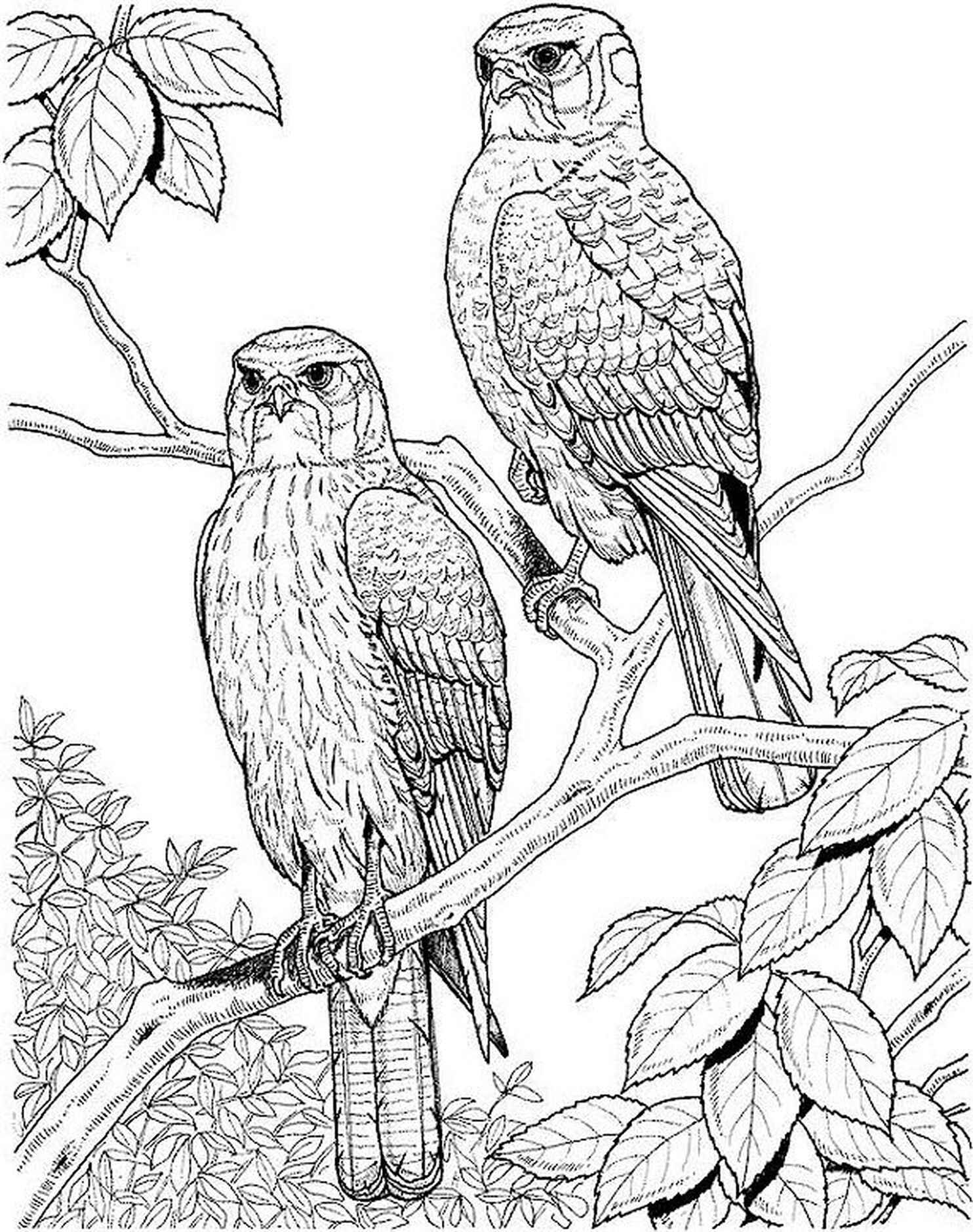 Owl Adult Coloring Pages Coloring Pages