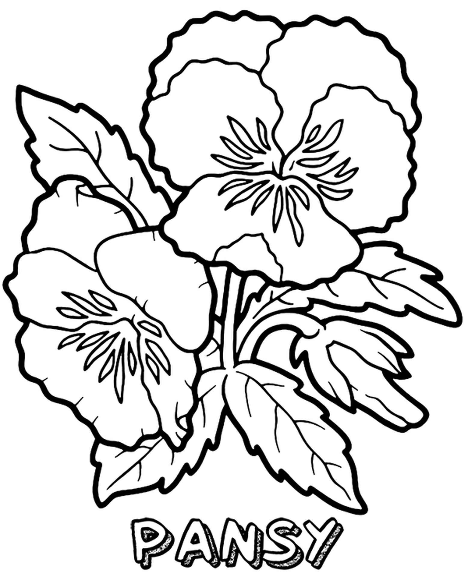 Purple Pansies Coloring Sheets