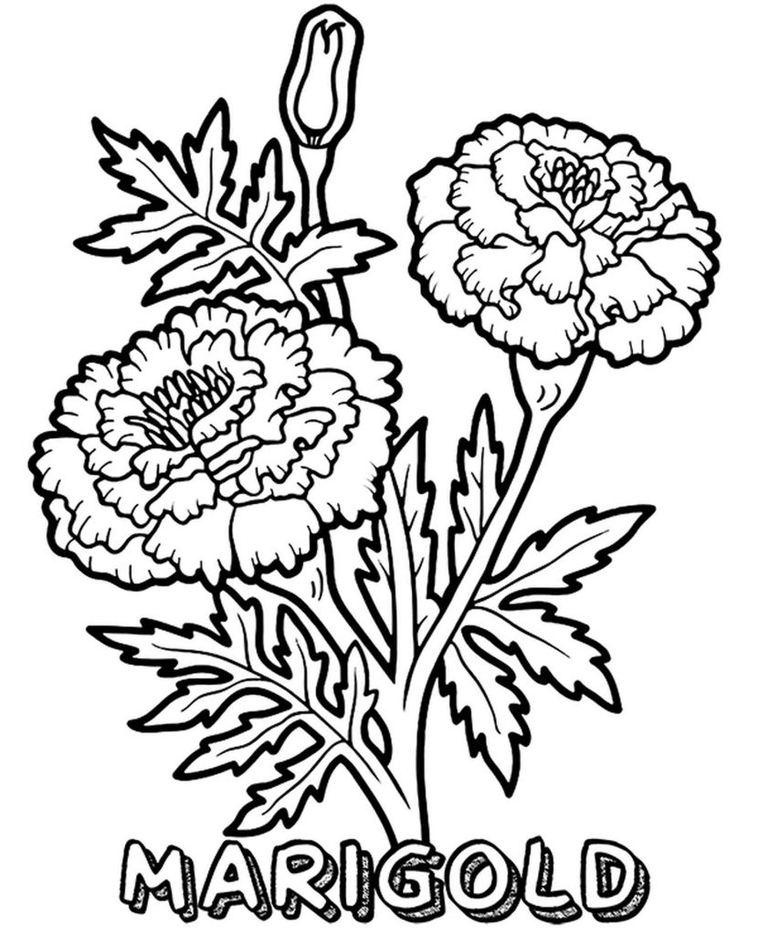Red And Yellow Marigolds Coloring Pages
