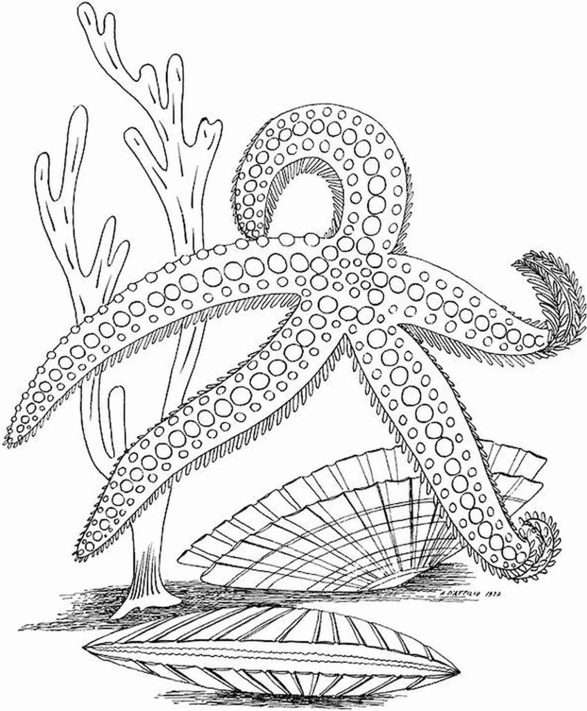 Sea Star Coloring Page For Adults