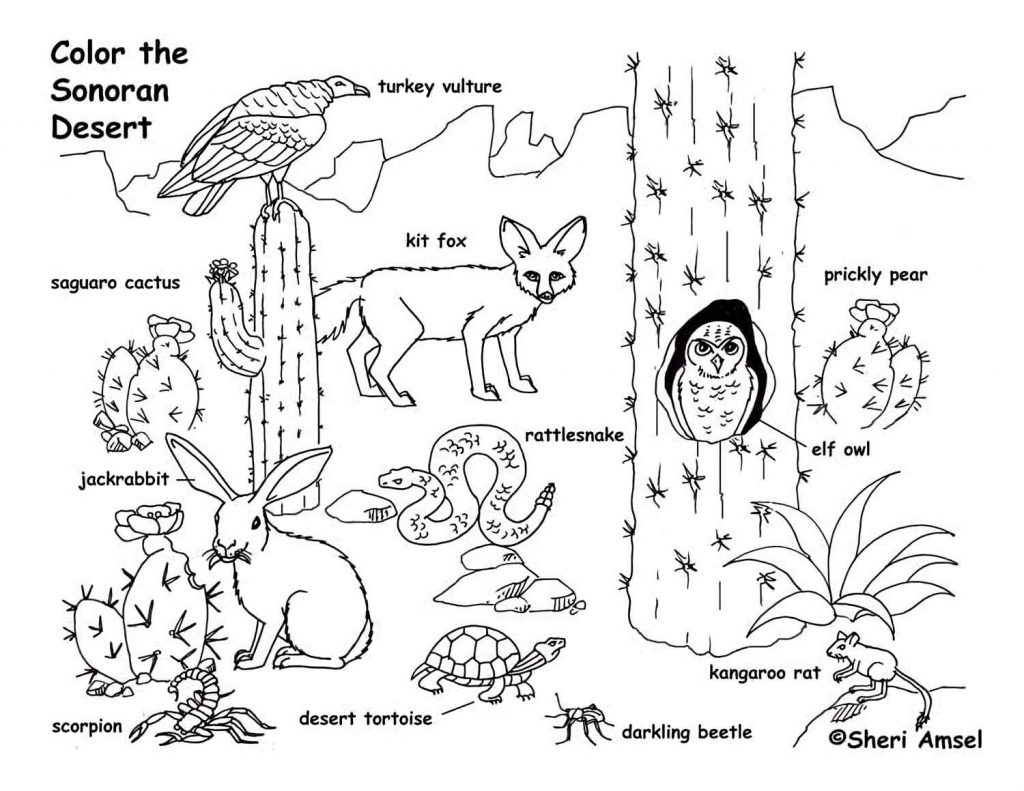 Sonoran Desert Animals Coloring Page For Kids