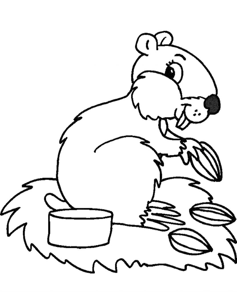 Squirrel Eating Nuts Coloring Page