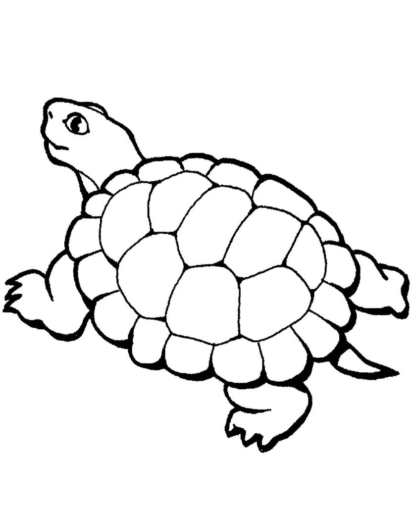 Turtle Coloring Page For Kids