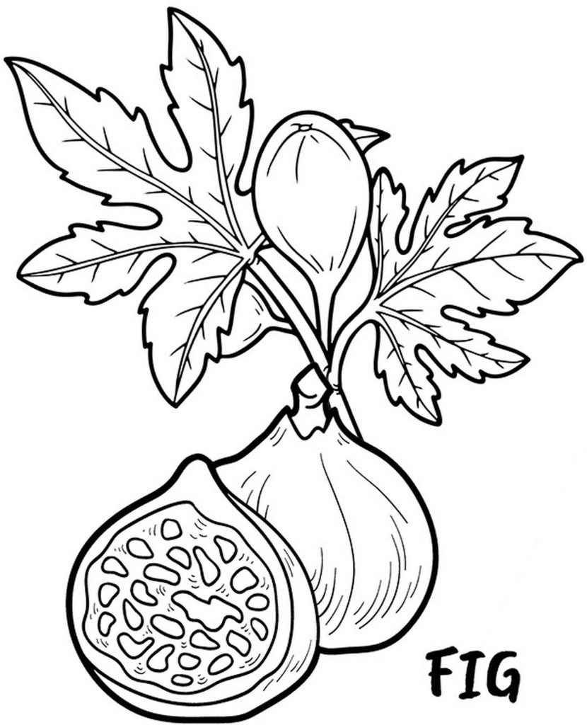 Two Figs Coloring Page