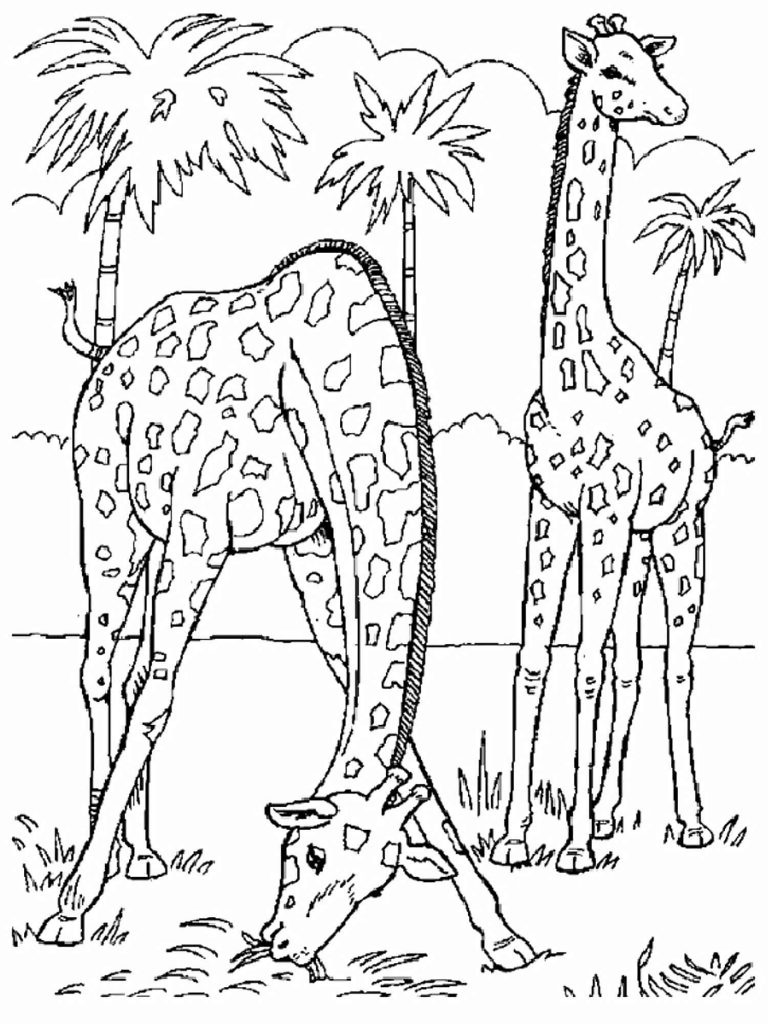 Two Giraffes In Africa Coloring Pages