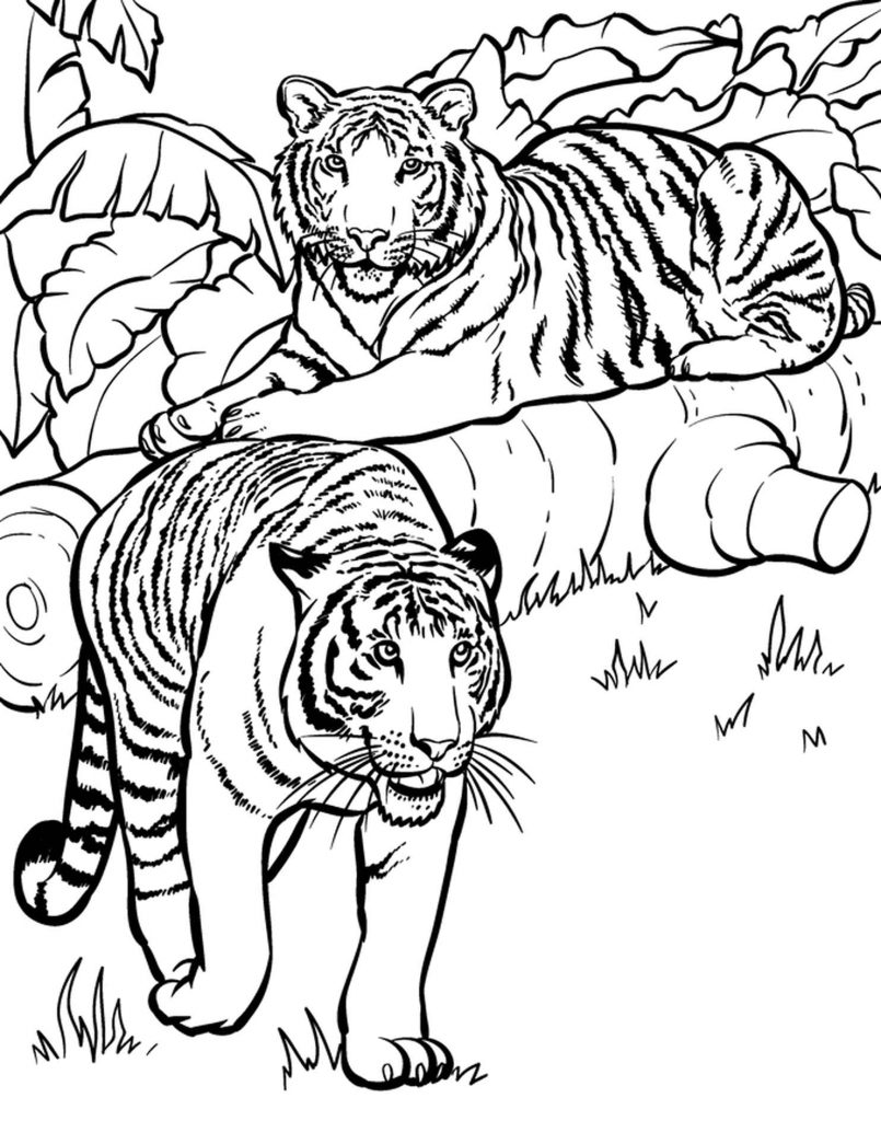Two Tigers Adult Coloring Page